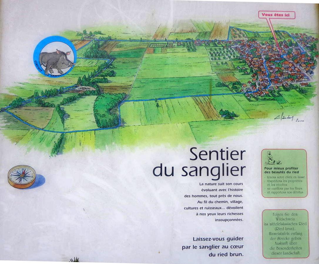 sentier-sanglier